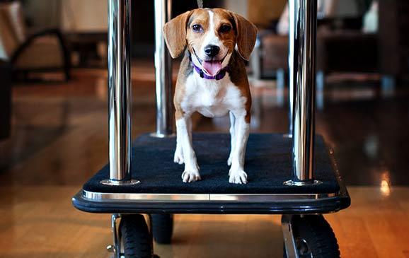 Pet Friendly Hotels Amp Animal Companion Tips For Las Vegas