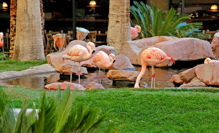 Flamingo Hotel in Las Vegas.