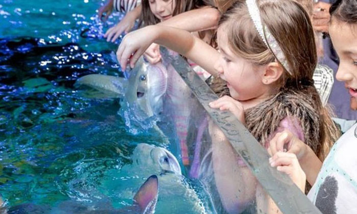 Children play with stingrays at the SeaQuest Interactive Museum.