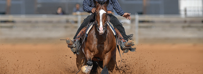 Visit The D in Las Vegas for some horse betting action. Photo Credit: thed.com.