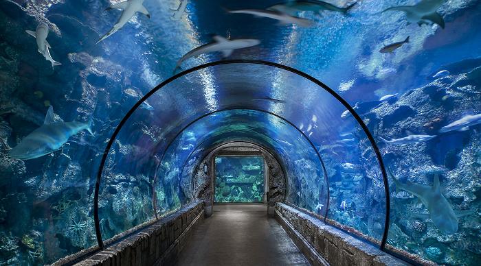 Shark Reef at Mandalay Bay Vegas